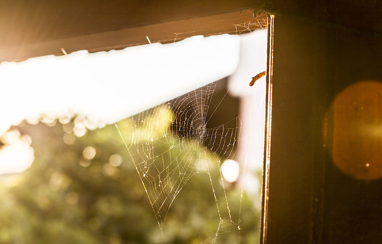 How to Get Rid of Dust and Cobwebs in Your Home